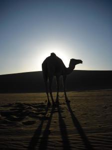West Africa - (121)