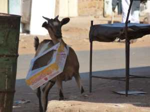 West Africa - (239)