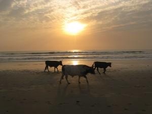 West Africa - (372)